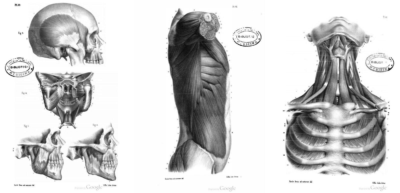 7 Libros para dibujo de Anatomía Humana y Animal PDF