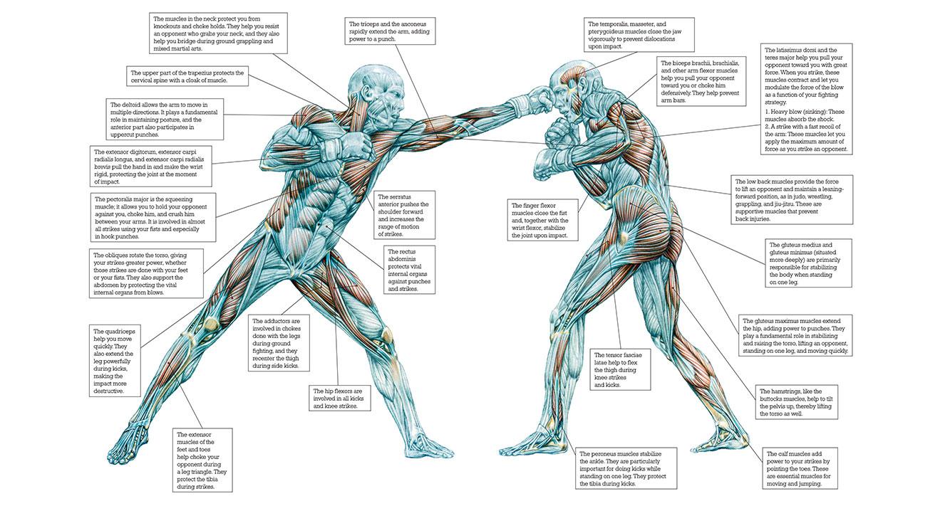 libro Strength Training Anatomy