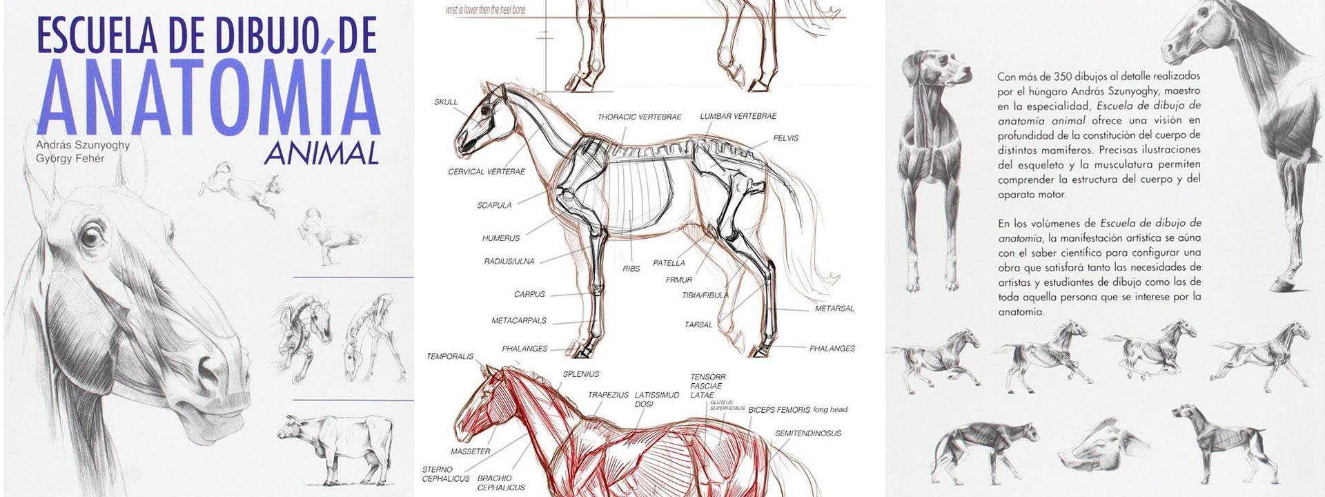 libro dibujo anatomía animal