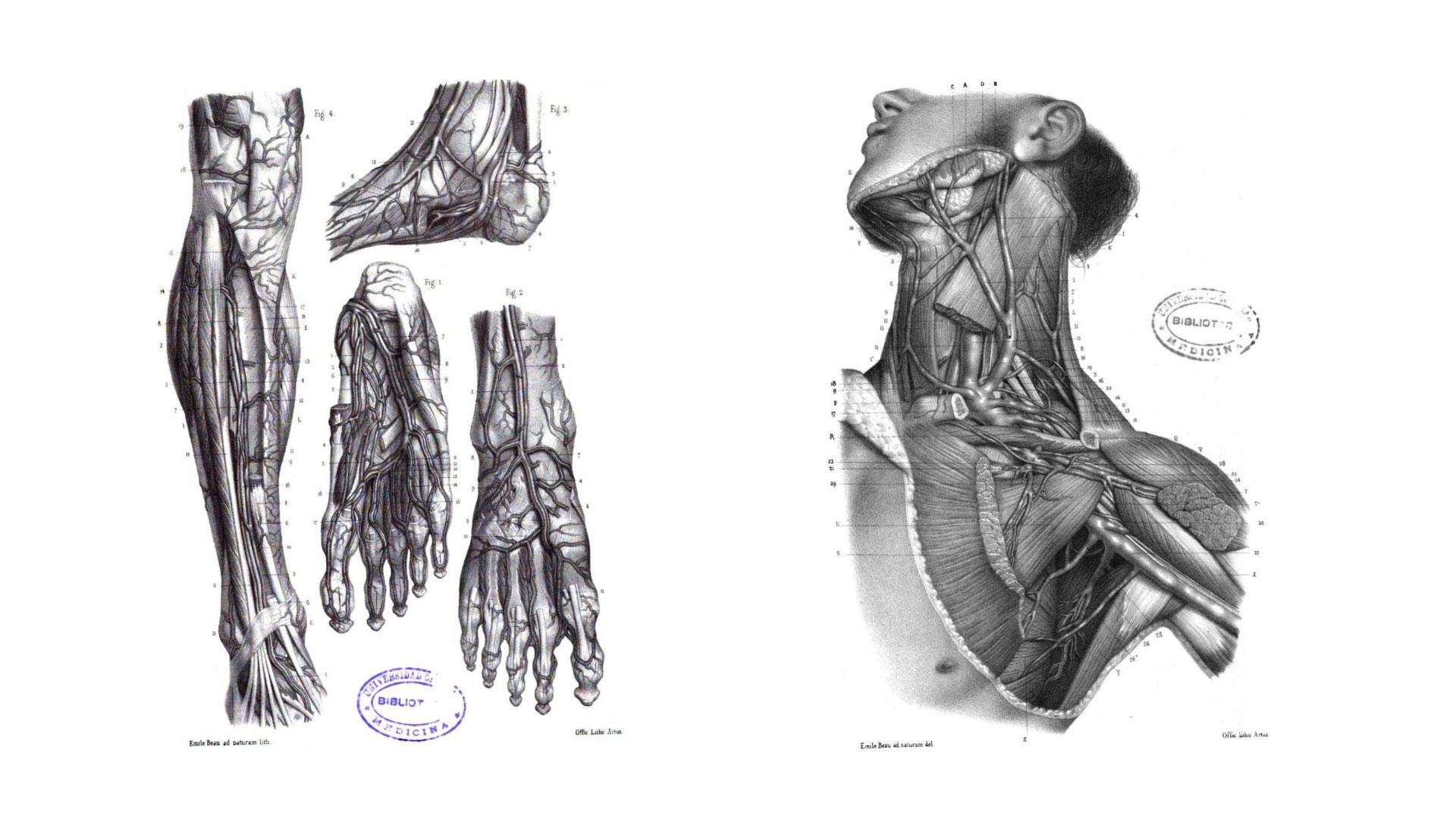 Libro Atlas de Anatomía descriptiva del cuerpo humano
